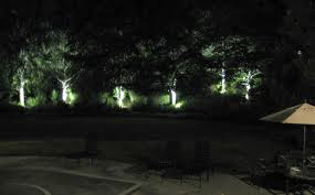 trees in spotlight