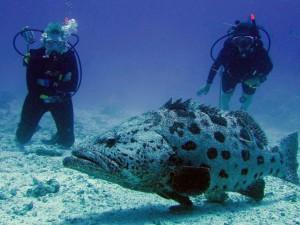 aaa thumb_0_67_scuba-diving-1