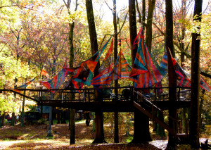 The tree house in Fall