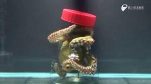 aaa octopus opening jar