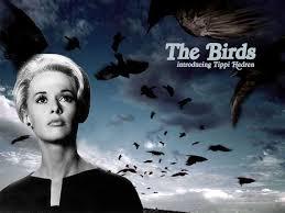 aaaThe Birds