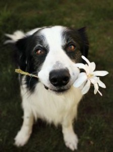 dog with daisy