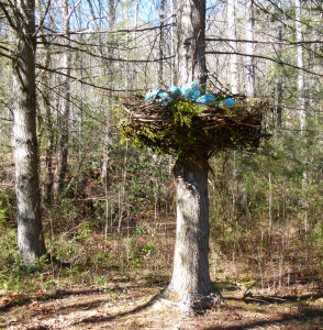 pterodactyl's Nest